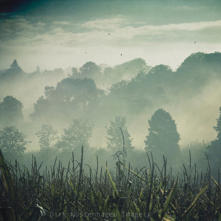 Rising morning fog in a rural area near Wuppertal, Germany - texturized photograph