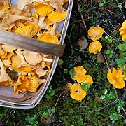 Mushrooms in Norway