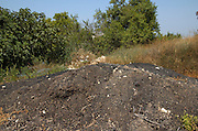 Israel, Judea Hills, Tzora winery and vineyards A compost heap. The compost is made of Pomace the pulp, skins, stalks, and seeds that remain after making wine