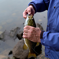 getting ready to release a Smallmouth Bass caught in the Boundary Waters in Northern, Minnesota. .