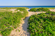 Path to Beach, Hither Hills, NY,  Long Island, New York