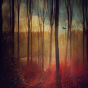 Morning sun in a misty forest - manipulated photograph<br /> Society6 products: https://society6.com/product/light-weavers_stretched-canvas#6=28<br /> <br /> REDBUBBLE products: http://www.redbubble.com/people/dyrkwyst/works/20953172-light-weaver?p=photographic-print