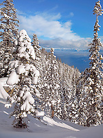 Fresh Snow, Lake Tahoe