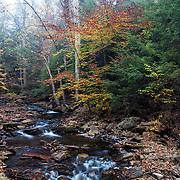 Fall foliage in Ricketts Glenn State Park