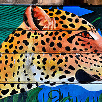 Amur Leopard Mural Near Philadelphia Zoo in Philadelphia, Pennsylvania<br /> The Philadelphia Zoo has two endangered Amur leopards. Kavan was born in 2001. His significant other, Emma, was born 14 months later. The panthera pardus orientalis breed is from far east Russia. Only 20 to 30 of the cats remain in the wild. This Amur leopard wall mural is near the entrance to the zoo in Philadelphia.