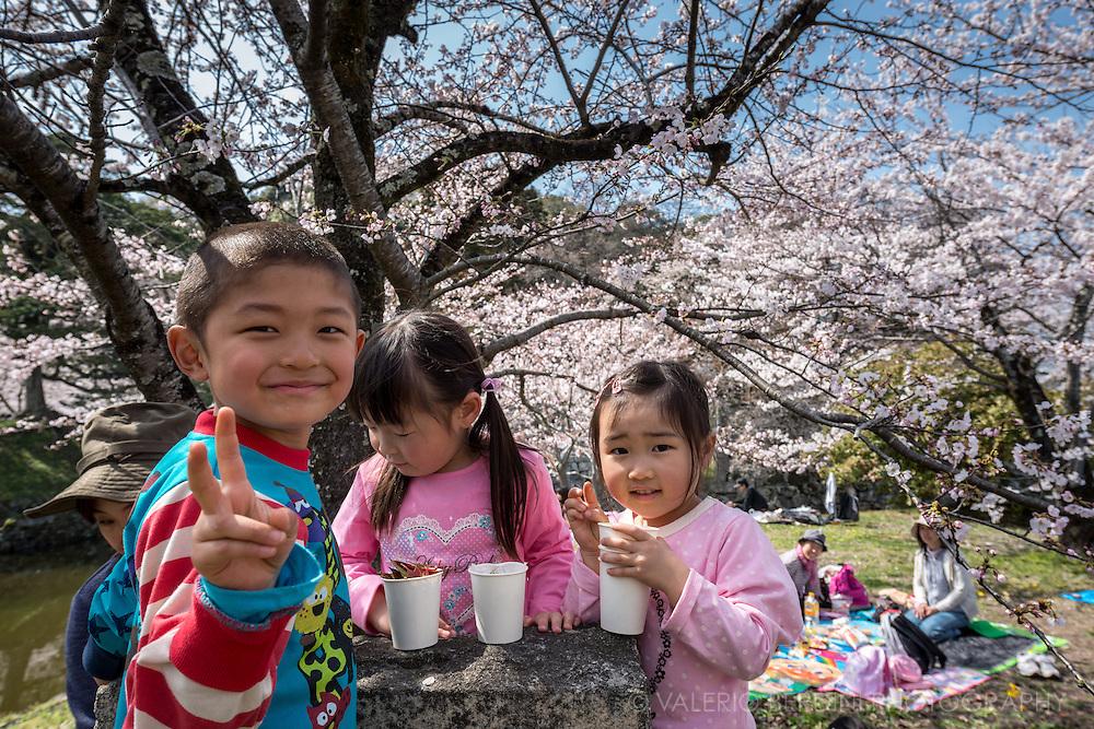 Children enjoy the sakura in the sun at Hikone, north west of Kyoto.