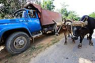Truck and bullocks near Vinales in Pinar del Rio, Cuba.