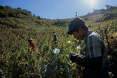 Myanmar drugs