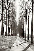 Avenues of trees line the path along the canal between Bruges and Damme in Belgium