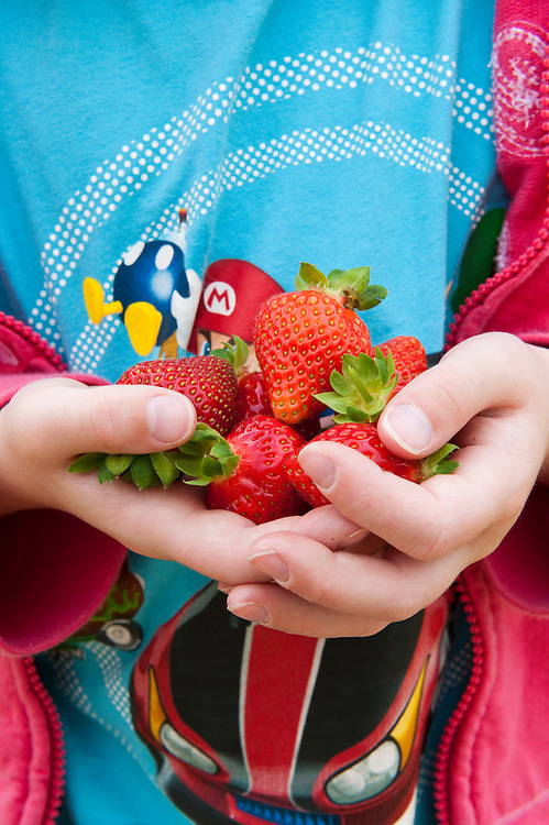Young girl holding freshly picked strawberries