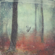 Ascending dove in a misty forest - textured photo.<br />