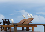 MALAYSIA - BORNEO;  LANKAYAN Island Dive Resort; a jewel in the Sulu Sear, an 1 1/2 hours boat ride from Sandkan; Birds on the Beach...