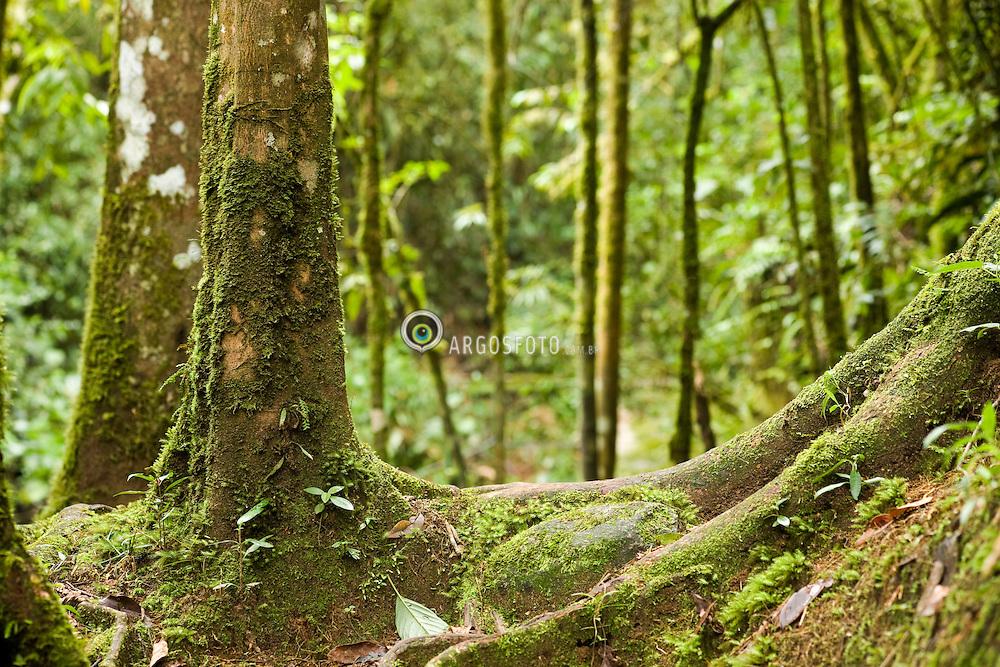 Arvore com liquens. Os liquens sao seres vivos muito simples que constituem uma simbiose de um organismo formado por um fungo (o micobionte) e uma alga ou cianobacteria (o fotobionte).Vale do Acantilado, entre Visconde de Maua e Maringa RJ - MG. / Lichen-covered tree. Lichens are symbiotic associations of a fungus (the mycobiont) with a photosynthetic partner (the photobiont also known as the phycobiont) that can produce food for the lichen from sunlight. Visconde de Maua, RJ, Brazil.