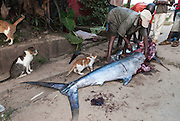 Fisher cutting up a marlin on the streets of Malindi, Kenya