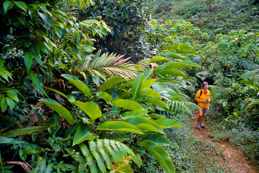 356203-1001C ~ Copyright:  George H. H. Huey ~ Hiker on the Boeri Lake Trail at 3,500 feet, at the base of Morne Macaque.  [Elfin woodland plant community]  Morne Trois Pitons National Park.  Dominica.  Release #124