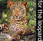 A photo led but fact filled book dedicated to to the Sri lanka leopard. Several authors, three main co-authors-Jehan Kumara, Rukshan Jayewardene and Ravi Samarasinha et al. Ninety five percent of the photos are also by the three main authors. Cover photo-Jehan Kumara.