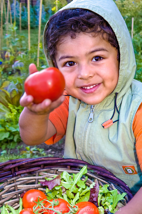 A young gardener offers a large ripe red tomato freshly harvested from his family's garden.