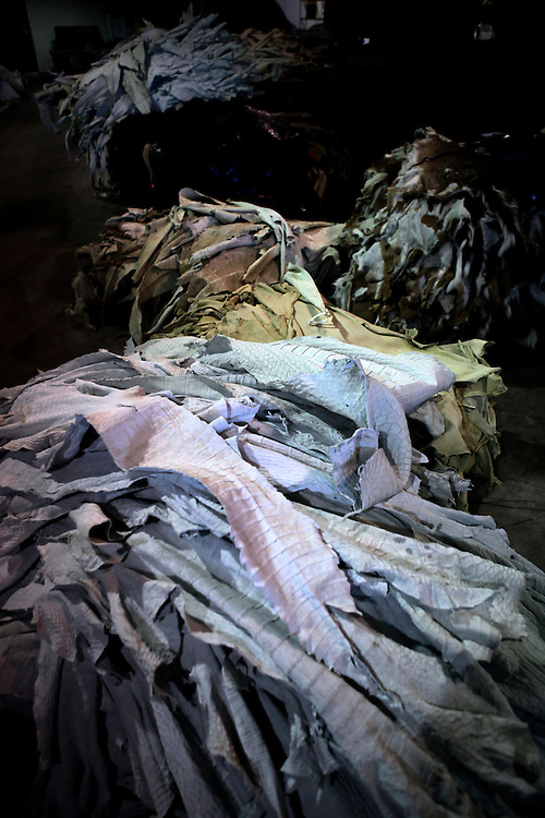 Piles upon piles of hides sit bleached and tanned at Sebring Custom Tanning in Sebring, Fla. on Sept. 8, 2010. At any time, the tannery is processing about 3,000 hides. Greg Kahn/Staff