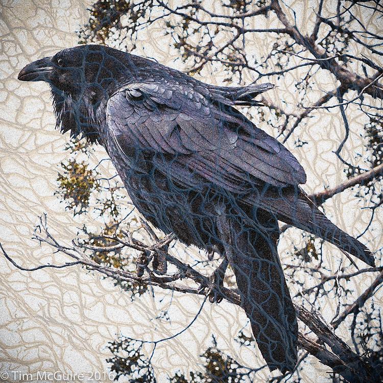 Experimental composite image of Raven and cactus bones.