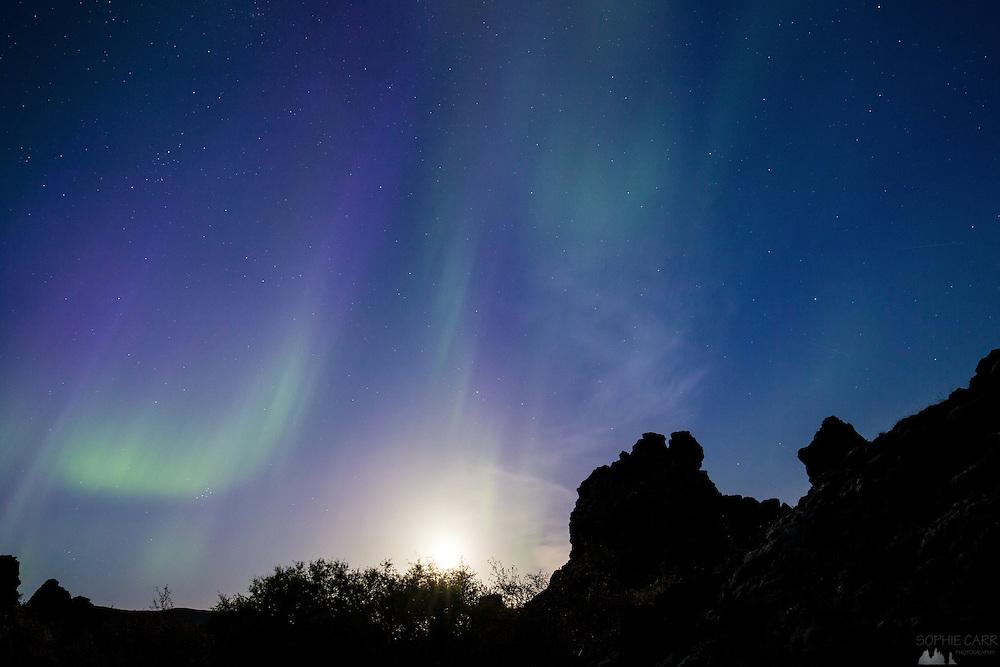 Aurora Borealis, or Northern Lights, seen over Dimmuborgir, Lake Myvatn in northern Iceland