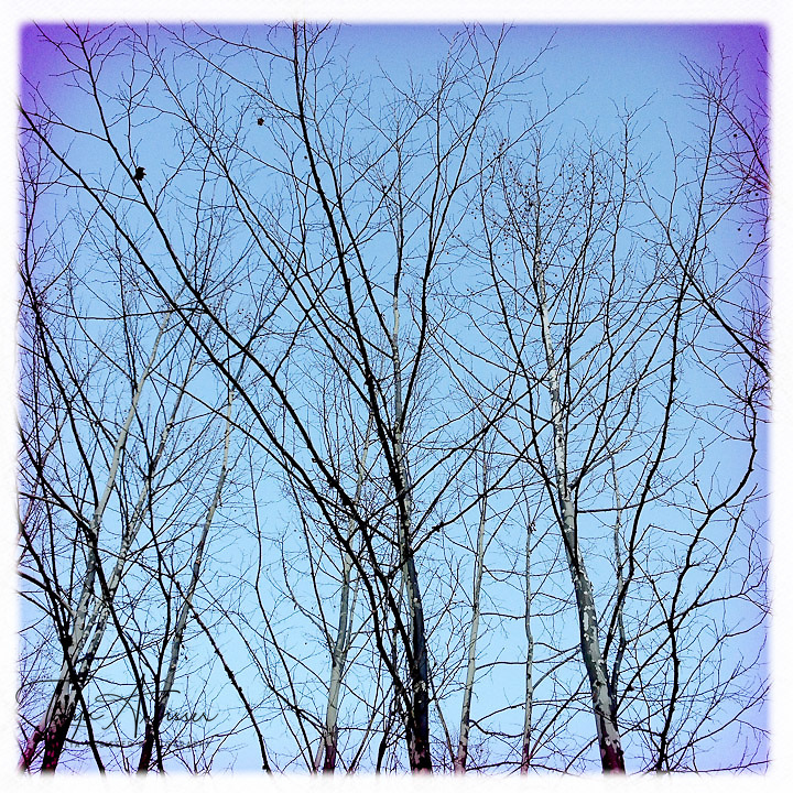 Bare trees in color - Dutchess County, New York