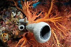 Invertebrates - marine | Wirbellose im Meer lebend