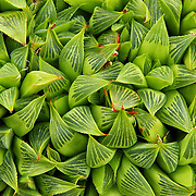 &quot;Bundles of Beauty&quot;<br />