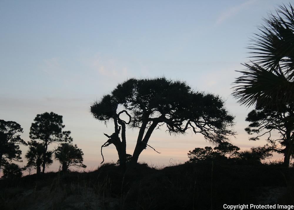 Jekyll Island shoreline silhouette