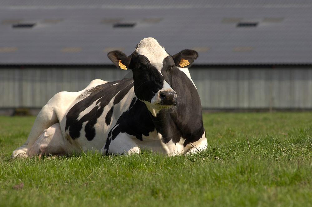 01/04/05 - CHAMPVERT - NIEVRE - FRANCE - GAEC BORDET - Agriculture raisonnee. Elevage de vache laitiere Prim Holstein - Photo Jerome CHABANNE