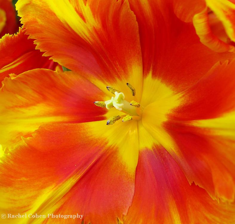 &quot;Life of the Party&quot;<br /> <br /> Flower by Rachel Cohen