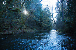 Kennedy Creek is a small low-land stream that flows into the head of Totten Inlet in Southern Puget Sound. It is one of the most productive chum salmon production streams in Washington State, with escapements averaging 41,000 spawners during the ten-year period of 1992 - 2001.