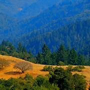 Mountain vista, Monte Bello Open Space Preserve, Palo Alto, California