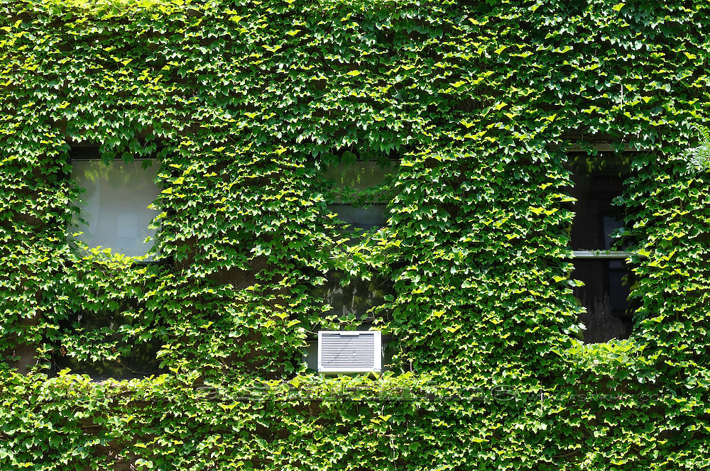 Green wall in New York City.