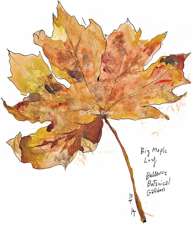 Maple Leaf at the Bellevue Botanical Garden.<br /> Gabriel Campanario / The Seattle Times