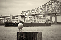 Seagull, Dusita Naree, and Bridge along the Mississippi River in New Orleans, Louisiana. Image taken with a Nikon D300 and 18-200 mm lens (ISO 200, 90 mm, f/11, 1/125 sec). Processed with Capture One Pro (including conversion to B&W).