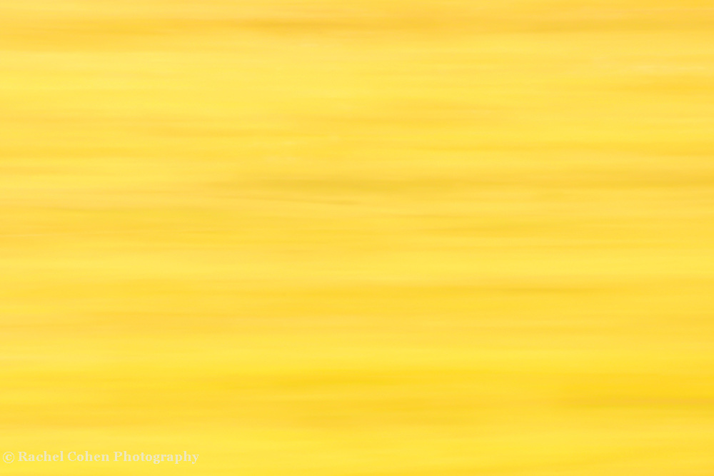 &quot;Yellow&quot;<br />