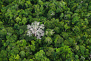Untouched Amazon rainforest in Para state, Brazil, September, 2013.