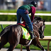 Itsmyluckyday in preparation for the Kentucky Derby at Churchill Downs in Louisville, KY on May 01, 2013. (Alex Evers/ Eclipse Sportswire)