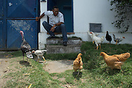 Salvador, Brasil - November 13 of 2013:  Mr. Jaguaracy San-Just and his chickens at the entrance of Esse Eme. Esse Eme is a little carpentry shop that produces furniture for offices and super-markets. Photo: Caio Guatelli, in assignment for Neue Zürcher Zeitung
