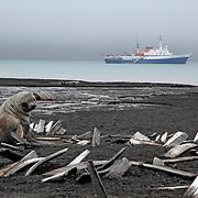Beautiful landscape in the Antarctic peninsula, Antarctica