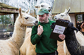 London Zoo, 2015 annual stock take