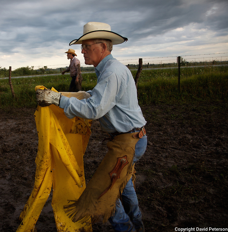 Cowboy Denny Amos sheds his raincoat after morning showers had  fallen on the Bar B ranch near Albia, Iowa  Amos and a dozen other hired hands helped rancher Catherine Bay with her bi-annual roundup where calves were roped and seperated from the herd for vaccinations, branded,  and inserted with growth stimulant implants.  The male calves were also castrated.  Bay runs the operation with a herd of over 2,000 cattle.