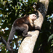 Monkeyin' Around