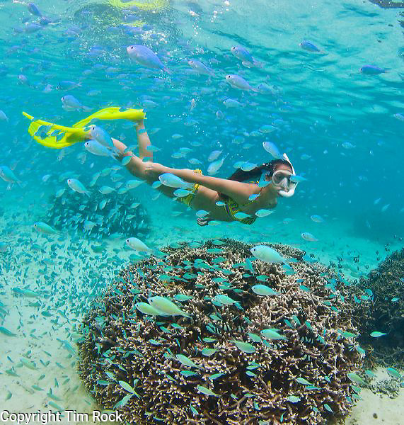 Guam Snorkeling At Ypao Beach At The Tumon Bay Marine Preserve Photography By Tim Rock