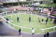 Roma - 07 Novembre 2010.Derby equitazione all' Ippodromo di Capannelle.vista dell'area di training.foto:Stefano Meluni