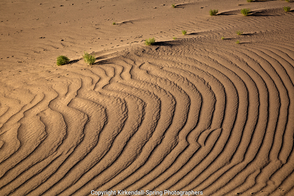 ID00667-00...IDAHO - Patterns in the sand at Bruneau Dunes State Park.