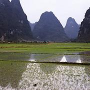 AA01205-03...CHINA - Flooded rice fields along the Li River near Yangshuo.