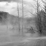 Upper Terrace Overlook - Mammoth Terrace Hot Springs - Yellowstone National Park - Black & White