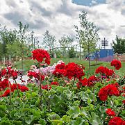 Rose Garden High Res