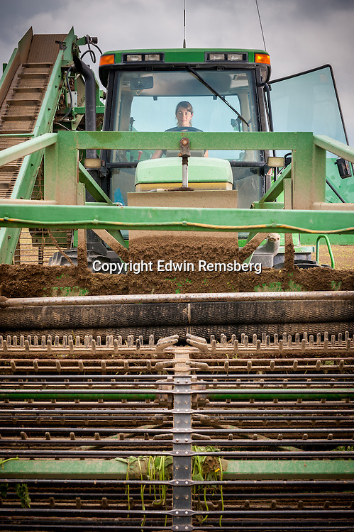 Young woman driving a large cucumber harvester at a  cucumber farm near Federalsburg, Maryland, USA